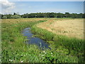 TG3604 : View from a Norwich-Great Yarmouth train - pasture and drainage ditch by Nigel Thompson