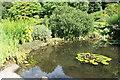 NX7560 : Pond at Threave Gardens by Billy McCrorie