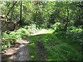 SU9586 : Permissive path in Heathfield Wood, part of Egypt Woods by David Hawgood