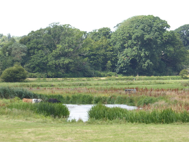 River Frome south of Wareham