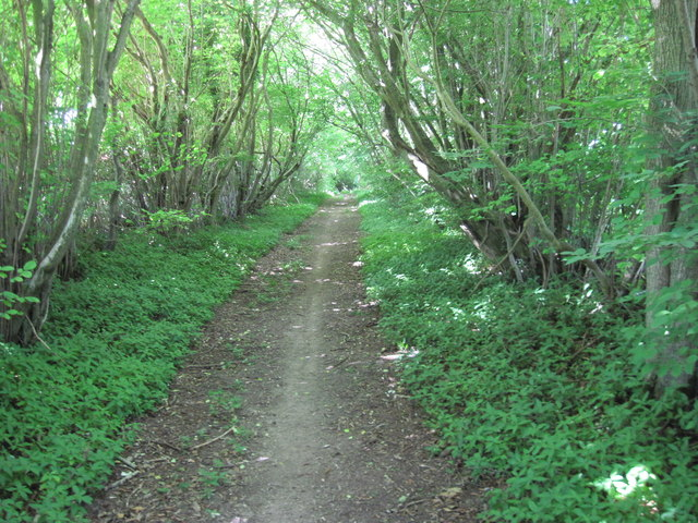 Track towards Headdon Farm