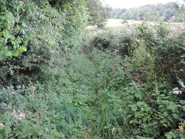 Footpath towards A272