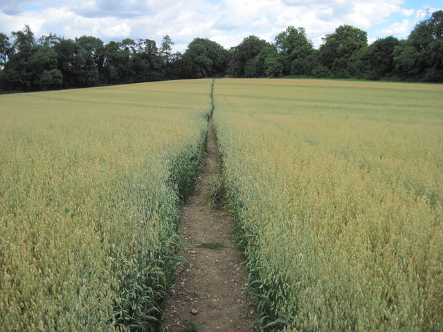 Path towards Webb Lane