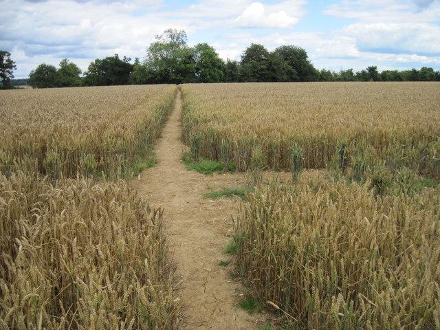 Path towards Bramdean Church