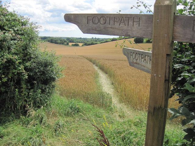 Footpath towards Warnford