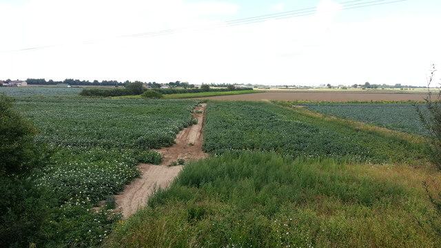 Low-lying farmland north of Surfleet Bank