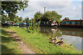 SP7843 : Ducks by the Grand Union Canal by Oast House Archive