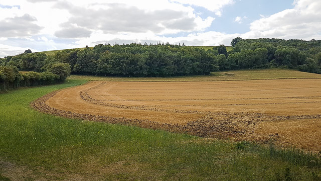 Curious harrowing pattern on Duncombe farm