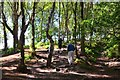 SJ5053 : On the Sandstone Trail, Bickerton Hill by Jim Barton