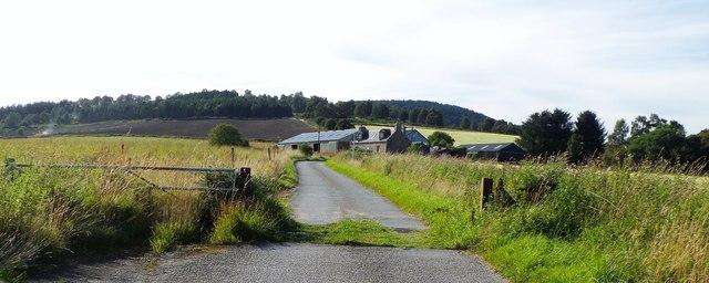 Grass-grown cattle grid near Tilphoudie