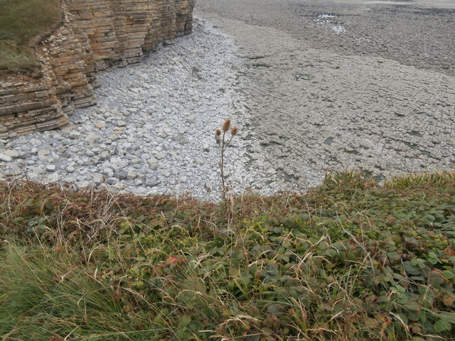 Teasel, cliffs and boulders