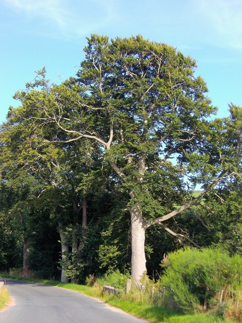 Mature trees sheltering Lumphanan Sewage Works (in August)