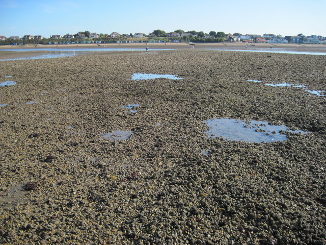Low tide at Hill Head