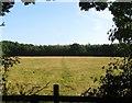 TQ1419 : White Field (2) by Simon Carey