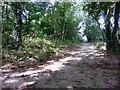 TQ5501 : Foot Path Junction Sign near Jevington Holt by PAUL FARMER