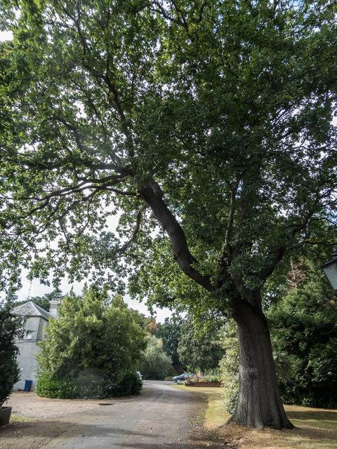 Oak Tree Apartments Branson Mo