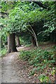 TQ3865 : Spring Park by Glyn Baker