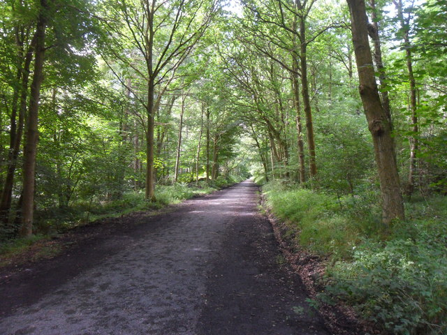 Chopwell Wood