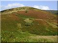 SN7553 : Hillside by Cwm Doethie Fawr, Ceredigion by Roger  Kidd