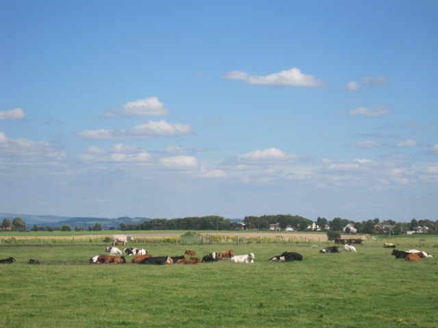 Farmland with cows