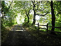H4069 : Shady along Rodgers Road by Kenneth  Allen