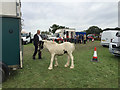 SP2970 : Meeting up, Kenilworth Horse Fair by Robin Stott
