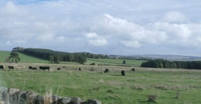 Farmland by Dere Street (A68)