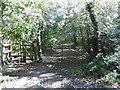 TQ2492 : Burtonhole Lane by Marathon