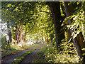 NH6755 : West drive to Rosehaugh by Julian Paren