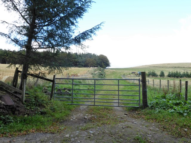 Gated track towards Wood of Bogs