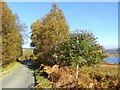 NH1801 : Trees beside the road from Kinloch Hourn by Oliver Dixon