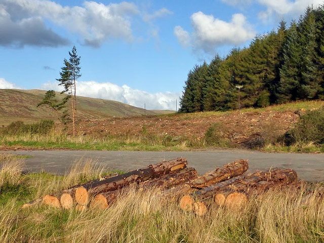 A forestry clear fell area at Thorny Rig