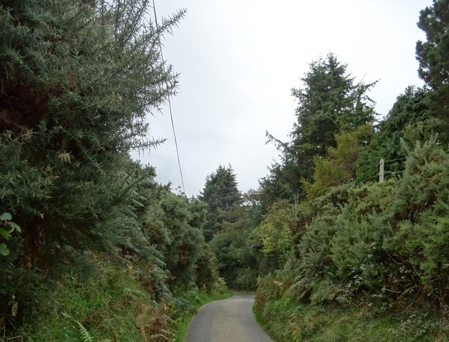 Bothir Cois Coille, a narrow cul-de-sac near Sandyford