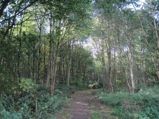 New Hutte Wood