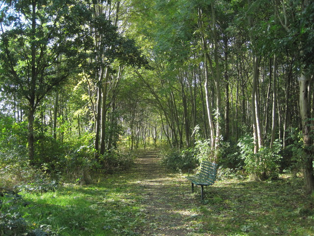 New Hutte Woods