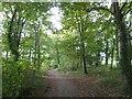 SX5154 : Path through The Belt woodland, Saltram by David Smith
