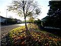 H4772 : Tree shadows and fallen leaves, Georgian Villas by Kenneth  Allen
