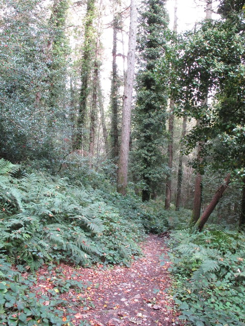 Public footpath in Fern Hill Coppice