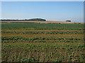 TL3040 : Stubble field by Hugh Venables