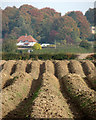 TL4751 : Stapleford: Bury Farm to Fox Hill by John Sutton