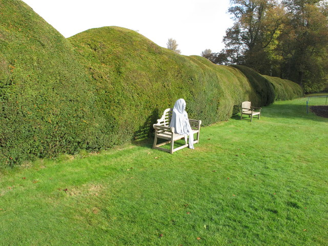 Wave-pruned hedge, Forde Abbey