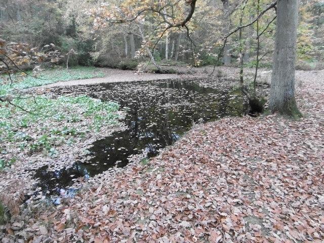 Pond In Fish Ponds Wood Marathon Cc By Sa 2 0