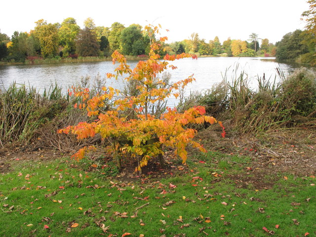 Autumn leaves by Sherborne Castle lake