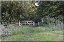 TQ3328 : High Weald Landscape Trail entering River's Wood by N Chadwick