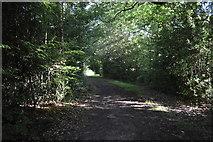 TQ3327 : High Weald Landscape Trail, River's Wood by N Chadwick