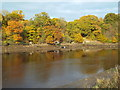 NZ3356 : River Wear near South Hylton by Malc McDonald