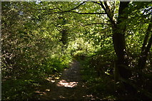 TQ3327 : High Weald Landscape Trail, Flat Wood by N Chadwick