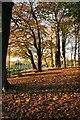 NS5570 : Autumn sunshine through the trees : Week 45
