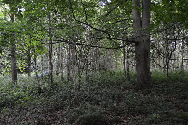 Woodland, Penshurst Park