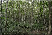 TQ5345 : Park Plantation by N Chadwick